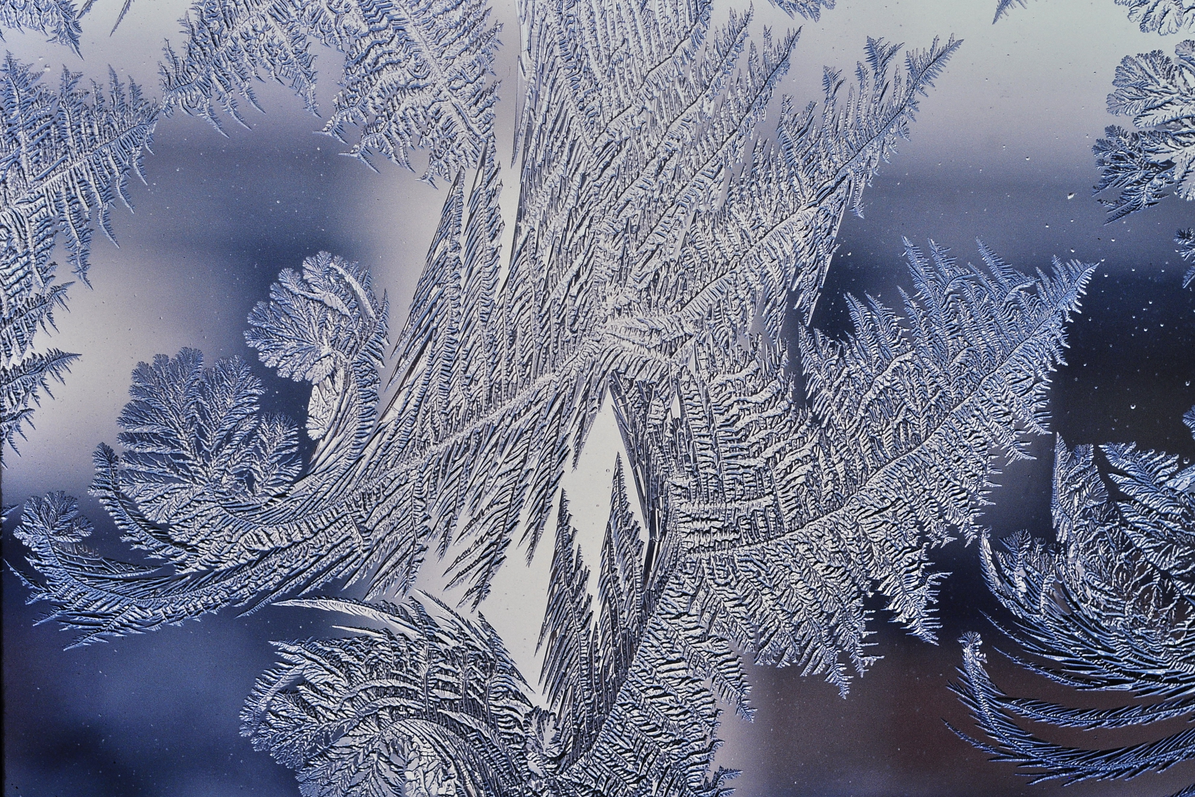 Frost_patterns_4